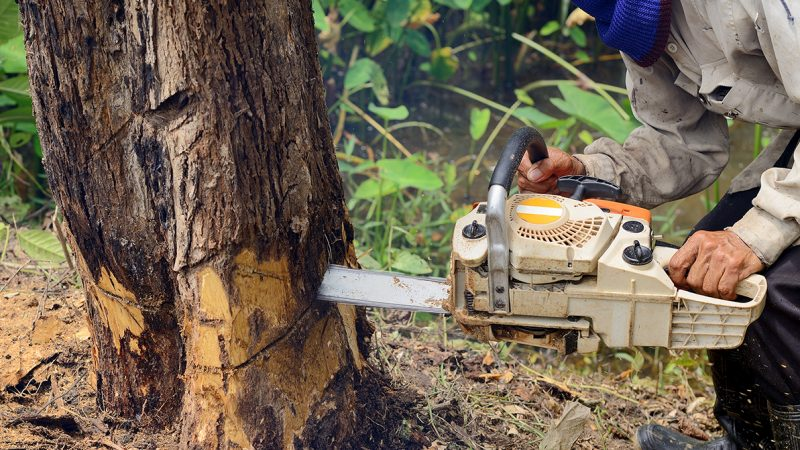 Tree Removal: Why You Need It