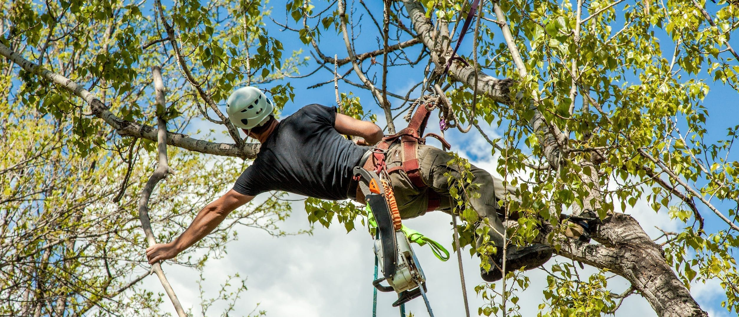 How Arborists Can Help Your Backyard