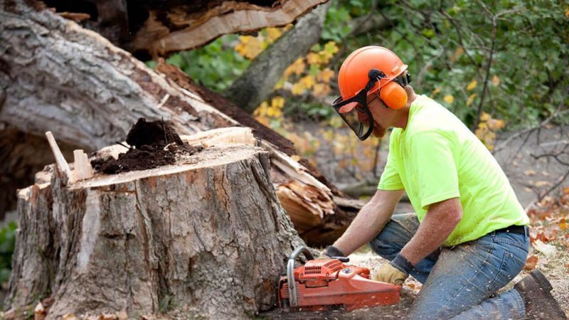 Factors to Take Into Consideration While Hiring a Tree Removal Service