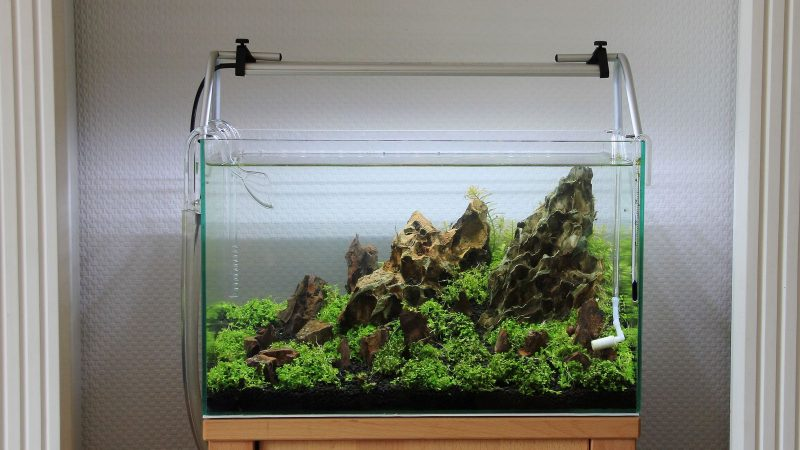 Aquascaping Tips For Beginners