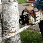 free tree cutting service near me