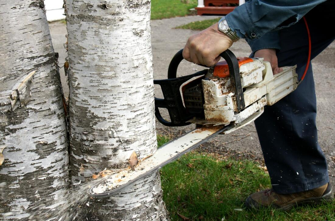 Benefits of Cutting Tree Services