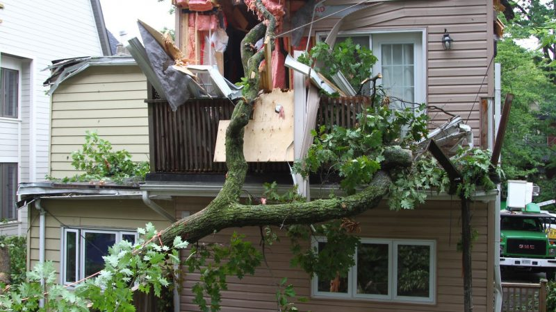 The Right Time to Hire an Emergency Tree Removal Service