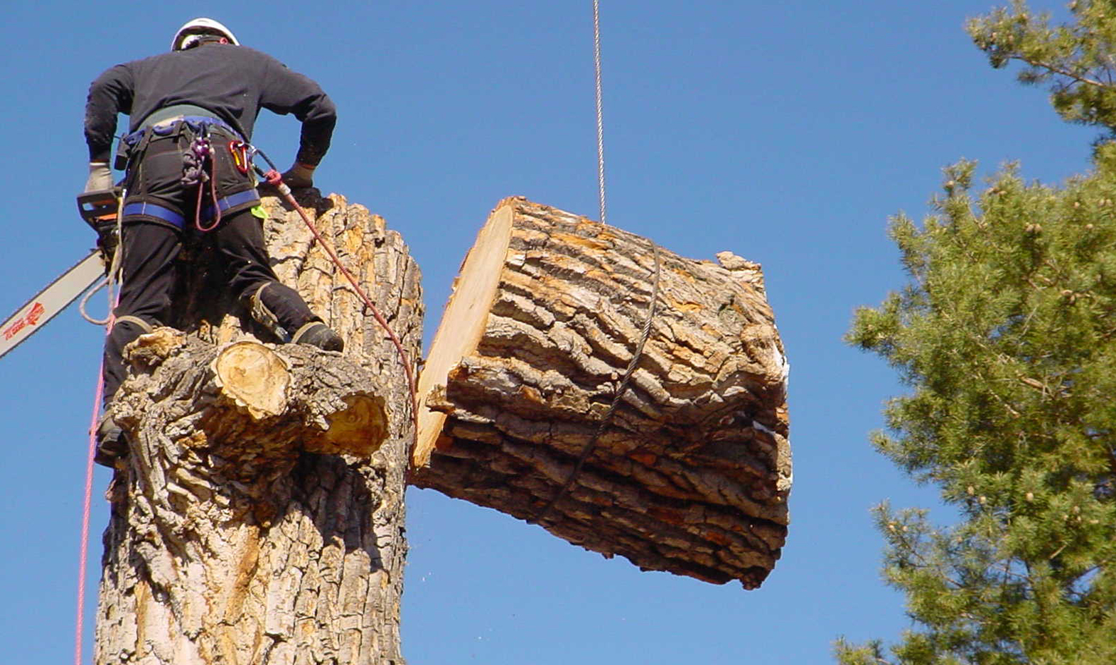 Why You Might Need Emergency Tree Removal Services