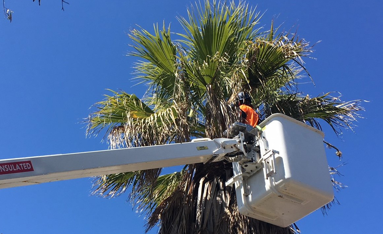Why Are Professional Tree Trimming Services Great