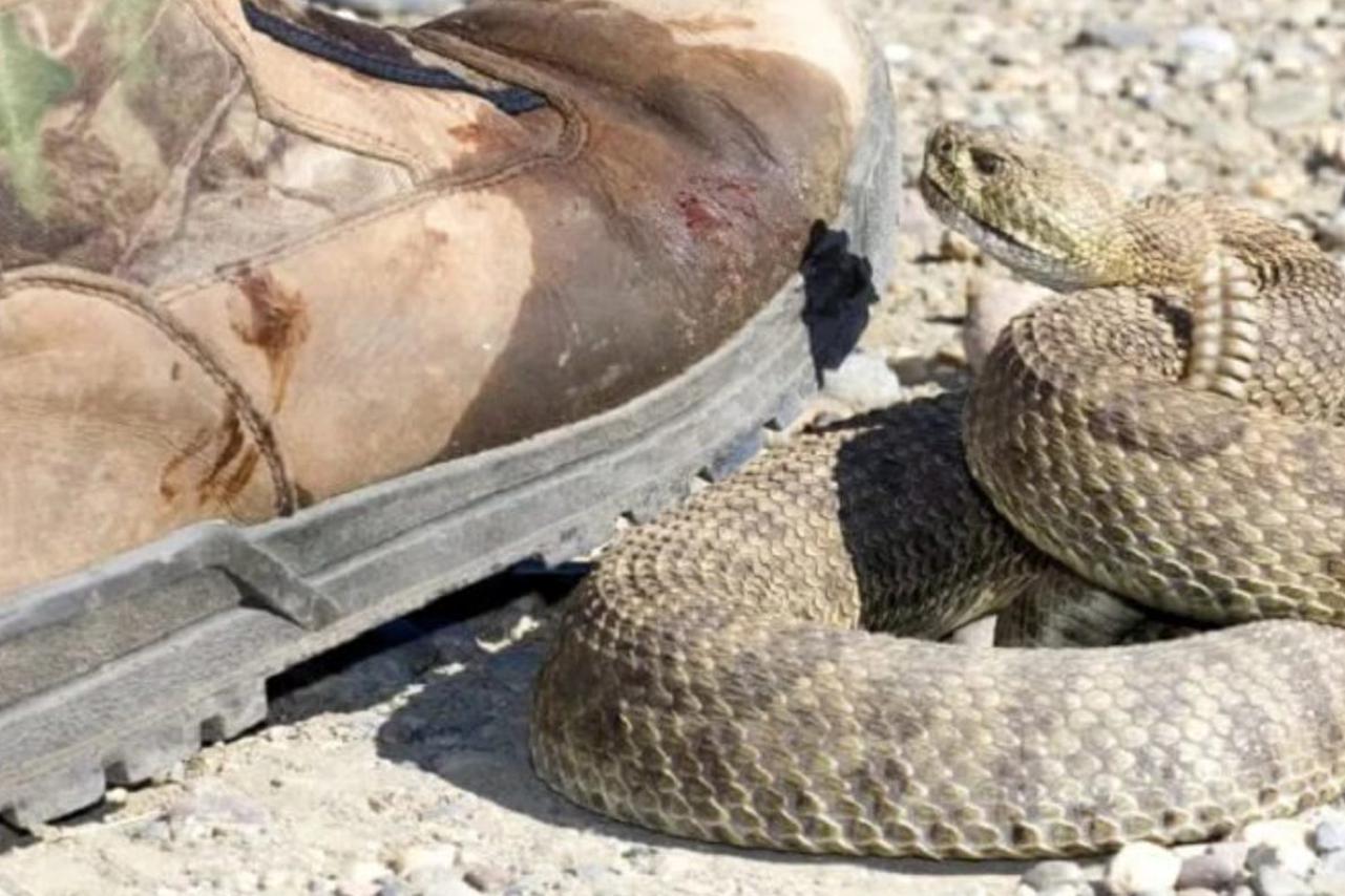 A Little Known Benefit of Snake Proof Boots