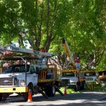 tree service prices