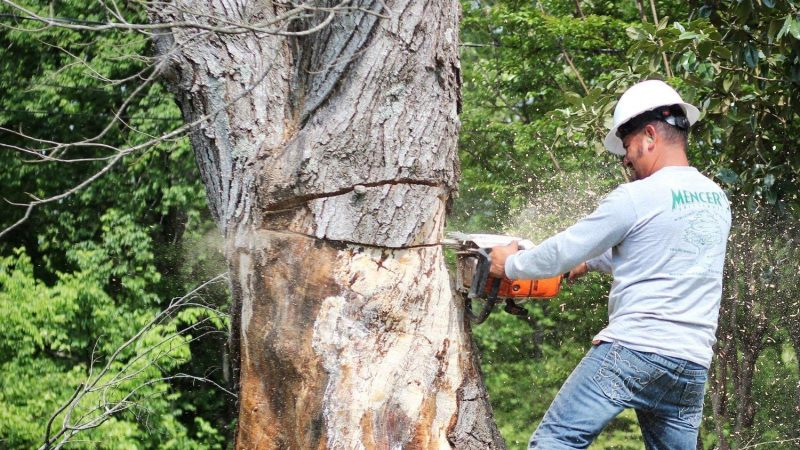 Why Tree Removal is Important For New Homes