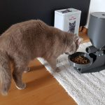best automatic cat feeder 2019