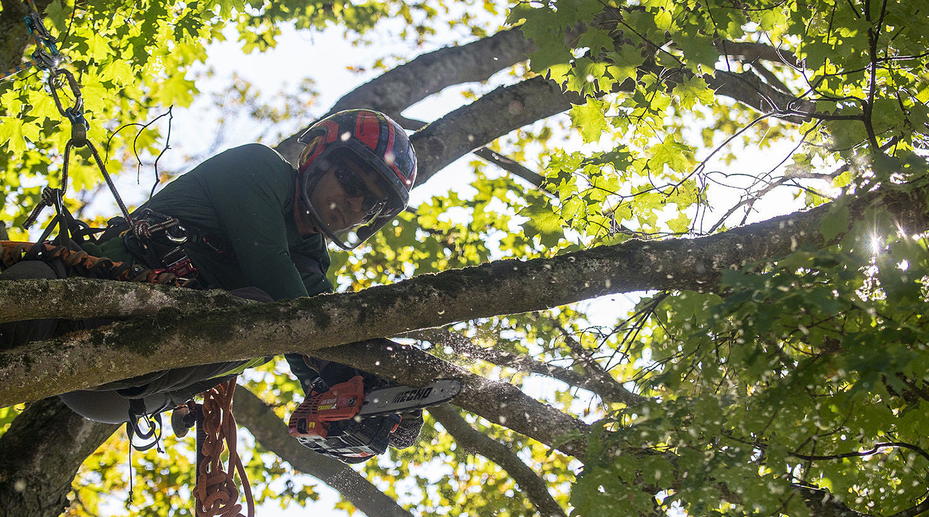 Sell Your Home Faster With Tree Service