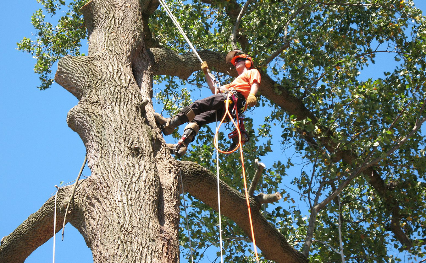 Why You Should Get Tree Servicing Done Weekly At First