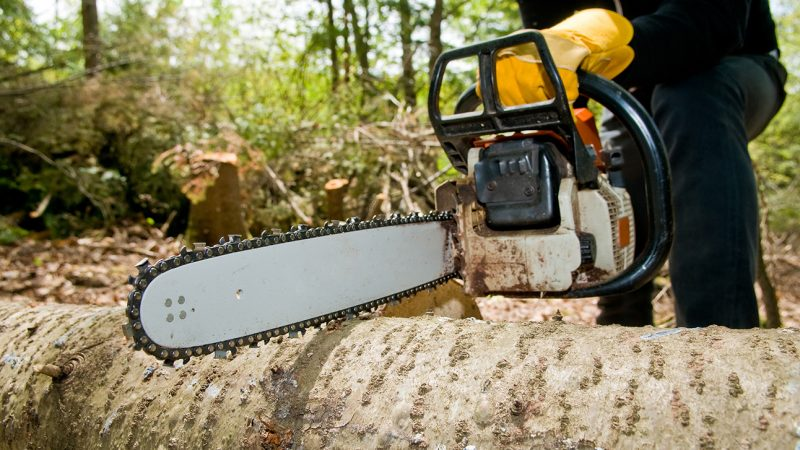 How Tree Service Can Reduce Energy Bills