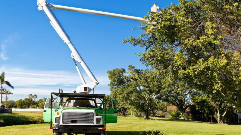 What to Ask When Hiring an Arborist