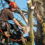 tree service near me prices