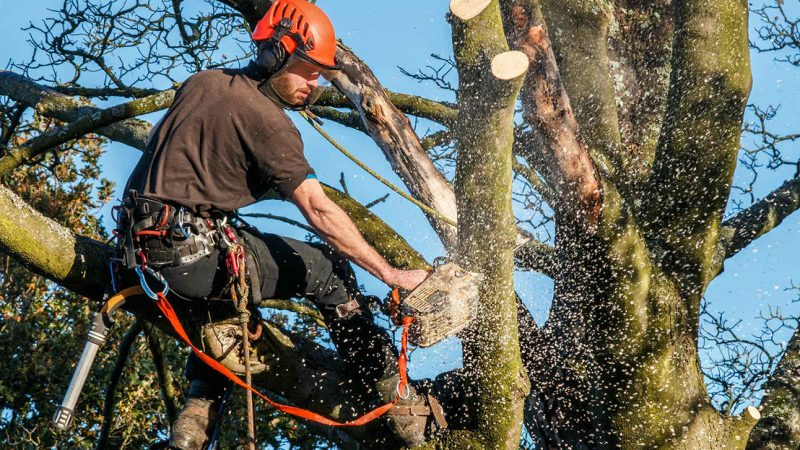 Dispelling a Common Misconception Around Tree Service