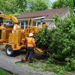 tree-service-by-professionals