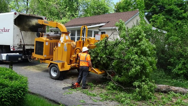 Things to Look For When Hiring a Tree Service
