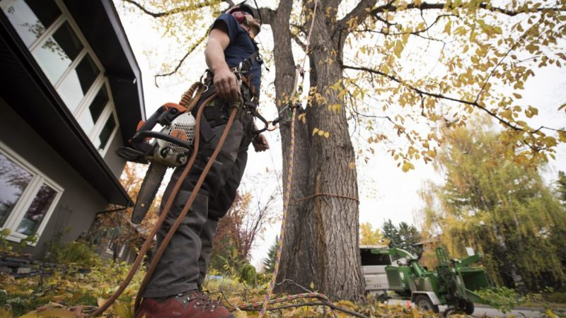 When Should You Call a Tree Service